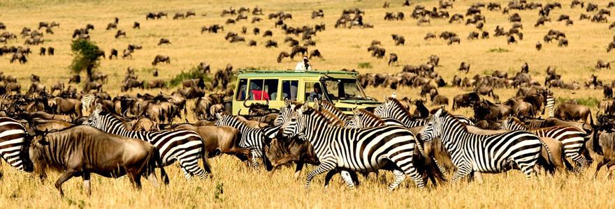 La flore du Serengeti